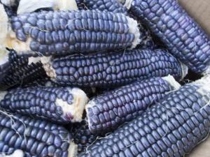 Zapatista Blue corn